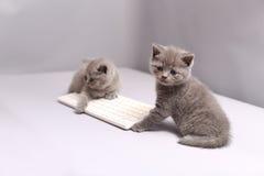 Kattungar på ett tangentbord Royaltyfria Foton