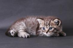 Kattungar på svart bakgrund Arkivfoto