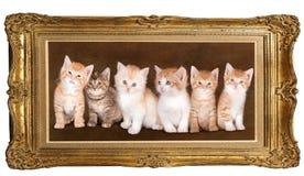 kattungar sex Arkivbilder