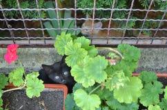 Kattungar som döljer i trädgård arkivbilder