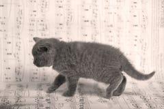 Kattungar som går på ett musikark, bakgrund Royaltyfri Fotografi