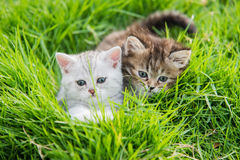 kattungar som leker två Royaltyfri Foto