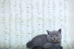 Kattungar som sitter på ett musikark Royaltyfria Foton