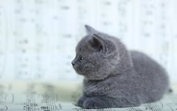 Kattungar som sitter på ett musikark Arkivfoton