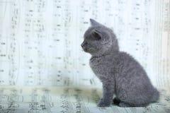 Kattungar som sitter på ett musikark Royaltyfria Bilder