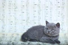 Kattungar som sitter på ett musikark Royaltyfri Bild