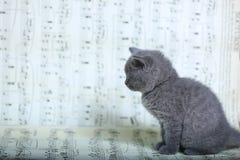 Kattungar som sitter på ett musikark Arkivbild