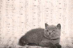 Kattungar som sitter på ett musikark Fotografering för Bildbyråer
