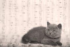 Kattungar som sitter på ett musikark Arkivbilder