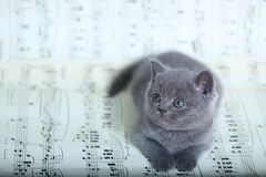 Kattungar som sitter på ett musikark, bakgrund Royaltyfria Bilder