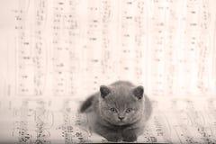 Kattungar som sitter på ett musikark, bakgrund Arkivbilder