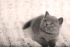 Kattungar som sitter på ett musikark, bakgrund Royaltyfri Foto