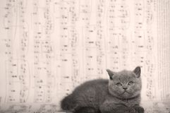 Kattungar som sitter på ett musikark, bakgrund Royaltyfri Fotografi