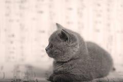Kattungar som sitter på ett musikark, bakgrund Arkivfoton
