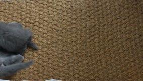 Kattungar som slåss på ett mattt för dörr lager videofilmer