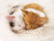 kattungar som sovar två royaltyfri foto
