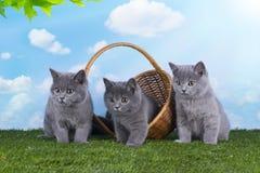 Kattungar som spelar i gräset på en solig sommardag Arkivfoto