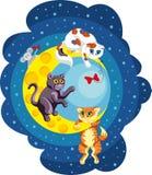 Kattungar som spelar på månen Arkivfoto