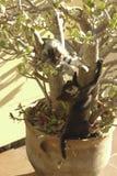 Kattungar spelar gulliga djur Royaltyfria Foton