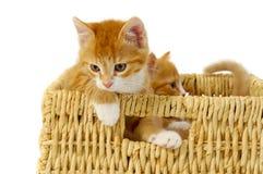 kattungar två Royaltyfria Foton