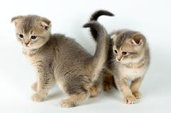 kattungar två arkivfoton