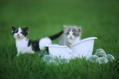 Kattungar utomhus i en grön äng av gräs royaltyfria foton