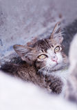 kattunge 2 arkivfoton