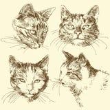 kattunge royaltyfri illustrationer