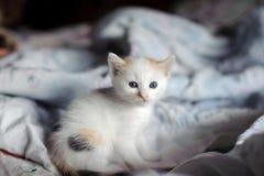 kattunge Arkivfoto