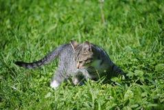 Kattunge fotografering för bildbyråer