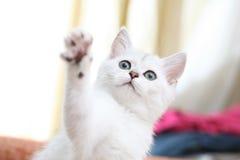 kattunge Royaltyfri Fotografi