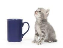 kattunge för kaffekopp Royaltyfri Bild