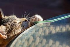 Kattunge för strimmig kattkatt som spelar och sträcker för att nå ett sugrör med synliga jordluckrare royaltyfri foto