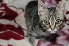 Kattunge husdjur, ögon, sött som är små fotografering för bildbyråer
