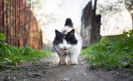 Kattunge i byn Arkivbild