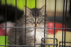 Kattunge i en bur på skyddet royaltyfria bilder
