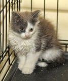 Kattunge i en bur på skyddet arkivbilder