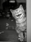 Kattunge i en burgråt Royaltyfri Fotografi
