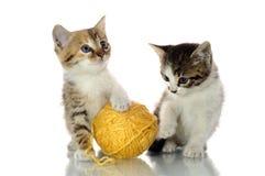 Kattunge i en gåvaask royaltyfri foto