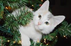 Kattunge i en julgran Royaltyfria Foton