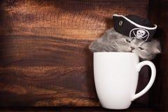 Kattunge i en kopp Arkivbild