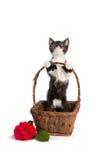 Kattunge i en korg Fotografering för Bildbyråer