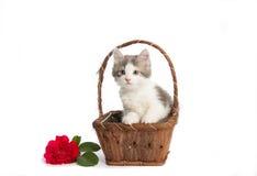 Kattunge i en korg Royaltyfri Foto