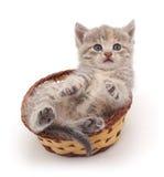 Kattunge i en korg Royaltyfri Bild