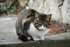 Kattunge i förkylningen Arkivbild