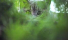 Kattunge i gräs Arkivfoto
