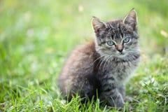 Kattunge i gräset Arkivbild