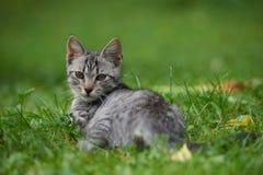 Kattunge i gras fotografering för bildbyråer