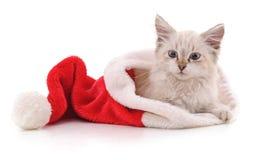 Kattunge i julhatt Arkivbild