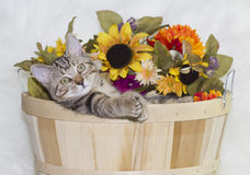 Kattunge i korg royaltyfri bild